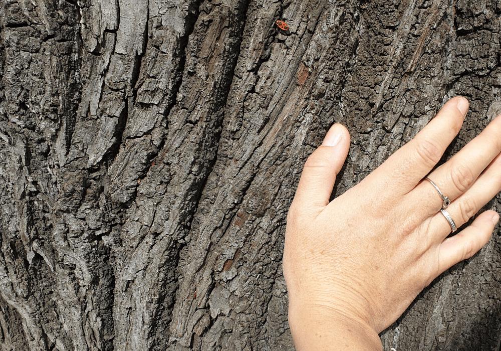 anine priche bitef festiva 2019 buba mara na drvetu