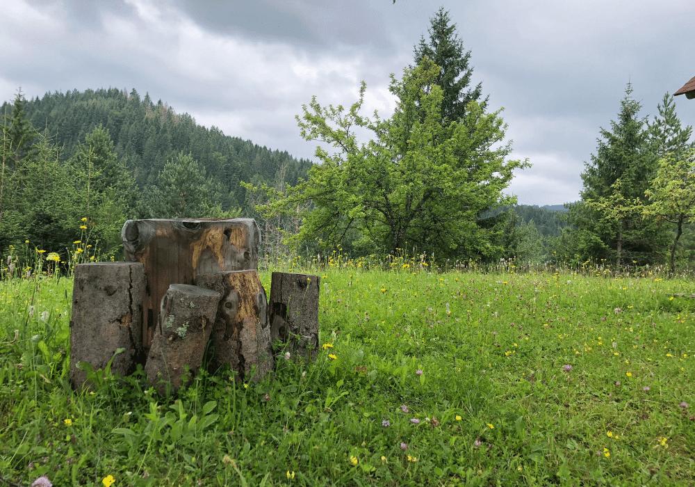 oluja planina seoski turizam planina tara lekovito bilje