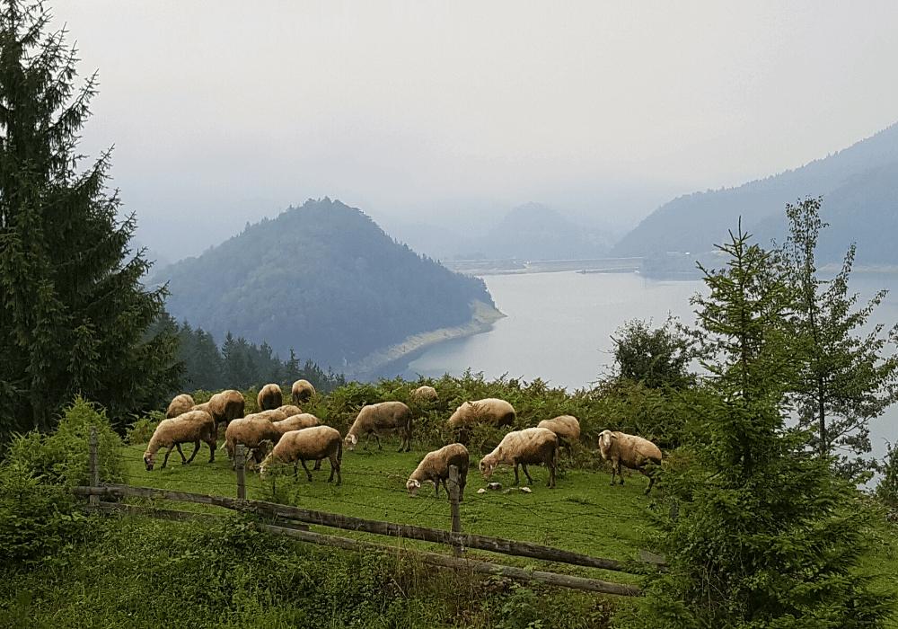 ovce tara livada zaovinsko jezero turizam netaknuta priroda